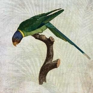Parrot Jungle IV Digital Print by Butler, John,Decorative