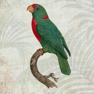 Parrot Jungle VI Digital Print by Butler, John,Decorative
