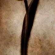 Damask Tulip II Digital Print by Zalewski, Christine,Impressionism