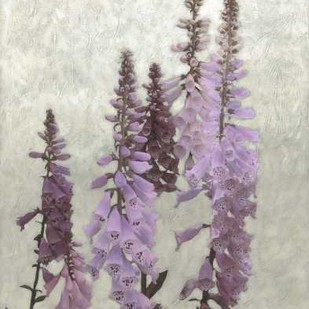 Non-Embellished Foxgloves I Digital Print by Zarris, Chariklia,Decorative