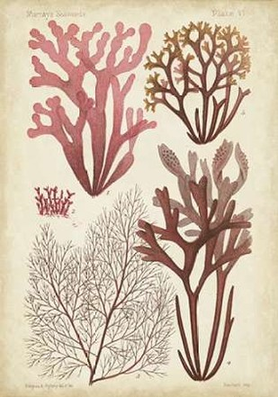 Seaweed Specimen in Coral II Digital Print by Vision Studio,Illustration
