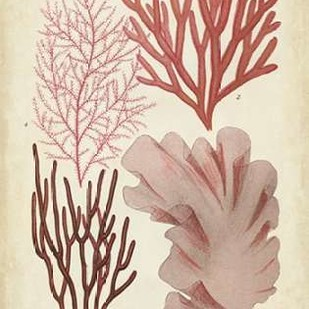 Seaweed Specimen in Coral III Digital Print by Vision Studio,Illustration