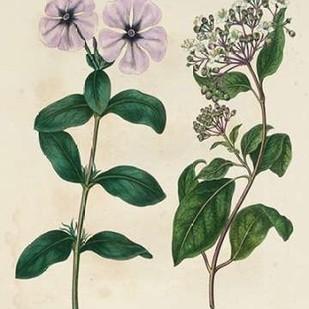 Garden Pairings VIII Digital Print by Edwards, Sydenham,Impressionism