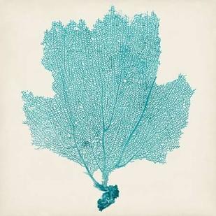 Sea Fan III Digital Print by Vision Studio,Decorative