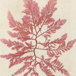 Brilliant Seaweed I Digital Print by Vision Studio,Decorative