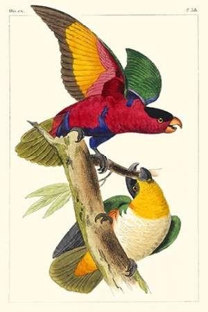 Lemaire Parrots I Digital Print by Lemaire, C.L.,Decorative