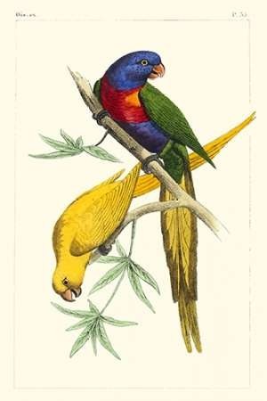 Lemaire Parrots IV Digital Print by Lemaire, C.L.,Decorative