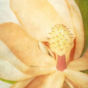 Vintage Magnolia II Digital Print by Malek, Honey,Photorealism
