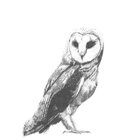 Wildlife Snapshot- Owl Digital Print by McCavitt, Naomi,Illustration