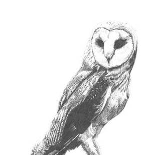 Wildlife Snapshot- Owl Digital Print by McCavitt, Naomi,Illustration