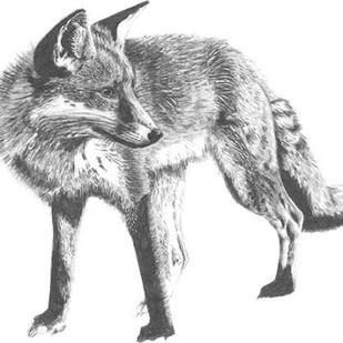 Wildlife Snapshot- Fox Digital Print by McCavitt, Naomi,Illustration