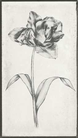 Single Stem I Digital Print by Goldberger, Jennifer,Decorative