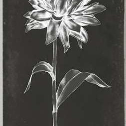 Single Stem III Digital Print by Goldberger, Jennifer,Decorative