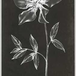 Single Stem IV Digital Print by Goldberger, Jennifer,Decorative