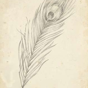 Peacock Feather Sketch II Digital Print by Harper, Ethan,Illustration