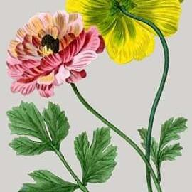 Vintage Garden Varieties I Digital Print by Vision Studio,Impressionism