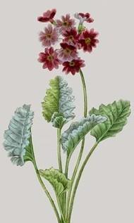 Vintage Garden Varieties VI Digital Print by Vision Studio,Impressionism