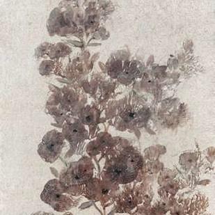 Sepia Flower Study II Digital Print by O'Toole, Tim,Decorative