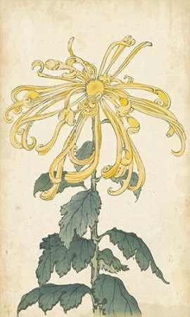 Elegant Chrysanthemums II Digital Print by Unknown,Decorative