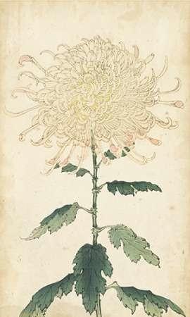 Elegant Chrysanthemums III Digital Print by Unknown,Decorative