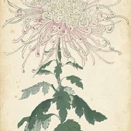 Elegant Chrysanthemums IV Digital Print by Unknown,Decorative