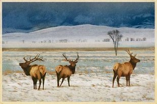 Refuge Elk Digital Print by Vest, Chris,Impressionism