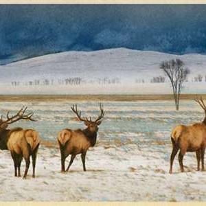 Refuge Elk Digital Print by Vest, Chris,Impressionism