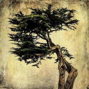 Grand Cypress Digital Print by Malek, Honey,Decorative
