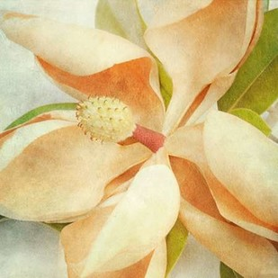 Vintage Magnolia I Digital Print by Malek, Honey,Impressionism
