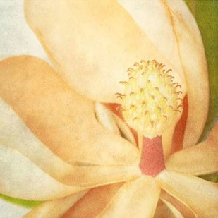 Vintage Magnolia II Digital Print by Malek, Honey,Decorative