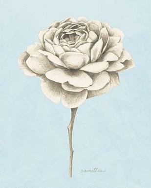 Graphite Botanical Study I Digital Print by Popp, Grace,Illustration