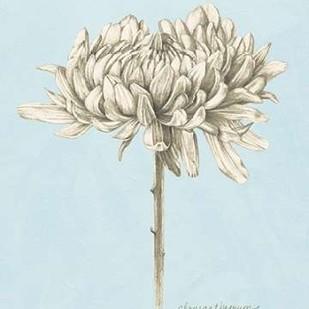 Graphite Botanical Study II Digital Print by Popp, Grace,Illustration
