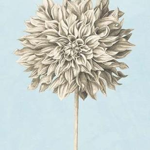 Graphite Botanical Study III Digital Print by Popp, Grace,Illustration