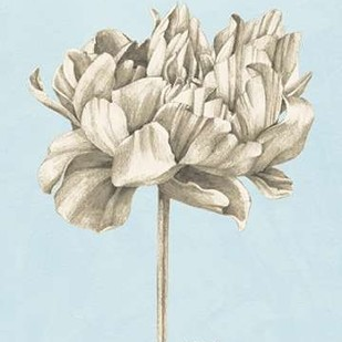 Graphite Botanical Study IV Digital Print by Popp, Grace,Illustration