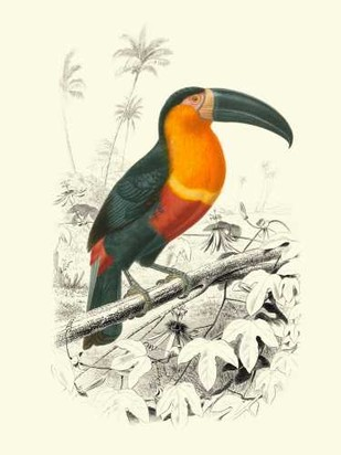 Birds of Costa Rica I Digital Print by D'Orbigny, M.Charles,Realism