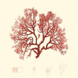 Nature Print in Coral II Digital Print by Vision Studio,Decorative