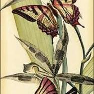 Butterfly Beauty I Digital Print by Vision Studio,Decorative