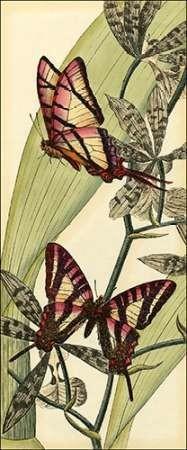Butterfly Beauty II Digital Print by Vision Studio,Decorative