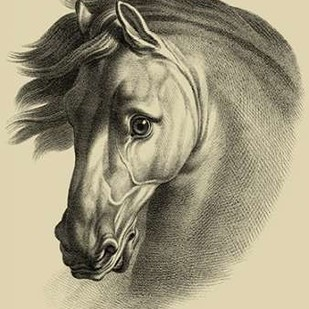 Equestrian Portrait I Digital Print by Vision Studio,Realism