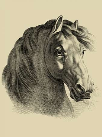 Equestrian Portrait II Digital Print by Vision Studio,Illustration