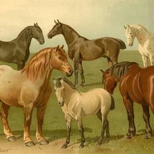 Horse Breeds II Digital Print by Volkers, Emil,Decorative