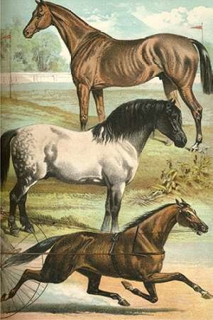 Johnsons Horse Breeds I Digital Print by Johnson, Henry J.,Decorative
