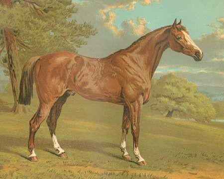 Cassells Thoroughbred I Digital Print by Cassel,Impressionism