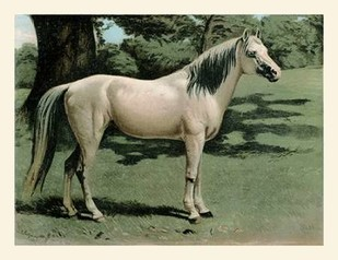 Cassells Horse I Digital Print by Cassel,Impressionism