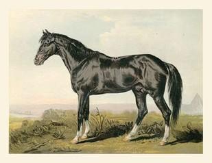 Cassells Horse II Digital Print by Cassel,Impressionism