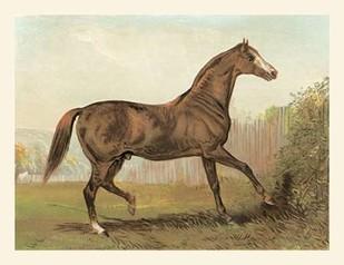Cassells Horse III Digital Print by Cassel,Impressionism