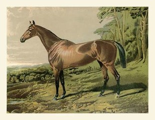 Cassells Horse IV Digital Print by Cassel,Impressionism