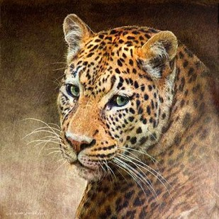Leopard Digital Print by Vest, Chris,Realism
