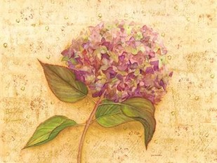 Hydrangea Love I Digital Print by Russell, Wendy,Decorative