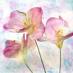 Pink Hyacinth III Digital Print by Malek, Honey,Decorative